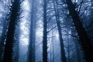 Hilofobia - frica de paduri si copaci | La-Psiholog.ro